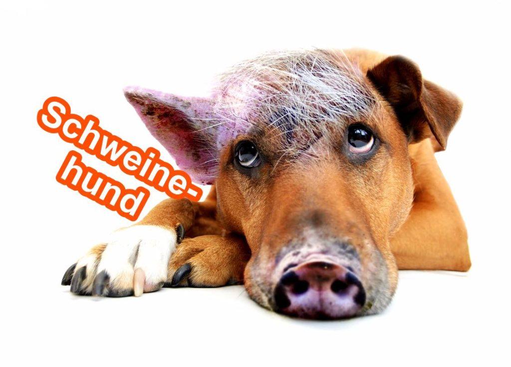 schweinehund